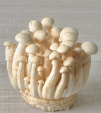 Shimeji mushroom, white beech mushroom Stock Photo