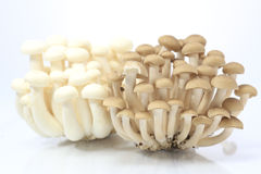 Shimeji mushrooms   Royalty Free Stock Photos