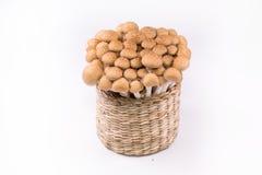 Shimeji mushrooms brown stock photography