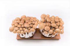 Shimeji mushrooms brown in the basket on white background Royalty Free Stock Images