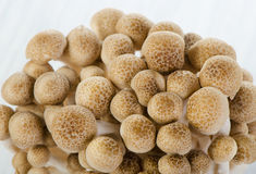 Shimeji mushrooms Stock Photo
