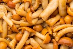 Shimeji mushrooms brown fumgi varieties Background Stock Photography