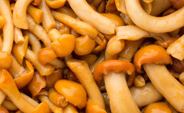 Shimeji mushrooms brown fumgi varieties. Background. Stock Photography