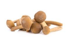 Shimeji mushrooms Stock Photography