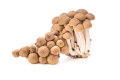Shimeji mushrooms brown varieties isolated on white background.  Royalty Free Stock Photo