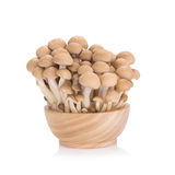 Shimeji mushrooms brown varieties on white background Stock Photos