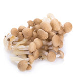 Shimeji mushrooms brown varieties on white background.  Stock Photography