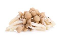Shimeji mushrooms brown varieties on white background Stock Image
