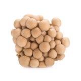 Shimeji mushrooms brown varieties on white background Royalty Free Stock Photos