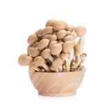 Shimeji mushrooms brown varieties on white background.  Royalty Free Stock Photography