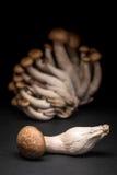 Shimeji mushrooms Stock Image