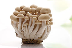 Shimeji mushrooms (Hypsizygus marmoreus) Royalty Free Stock Photography