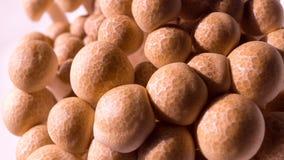 Shimeji-Mushrooms Stock Image
