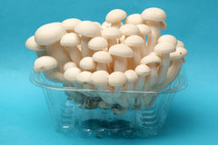 Shimeji mushrooms Stock Photography