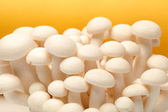 Shimeji mushrooms Royalty Free Stock Image