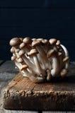 Shimeji mushrooms on wood Royalty Free Stock Photo