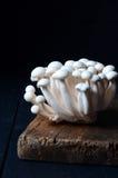 Shimeji mushrooms on wood Stock Images