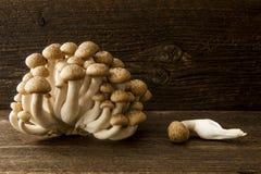 Shimeji mushrooms Royalty Free Stock Photos