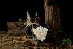 Shimejipaddestoel, Witte beukpaddestoelen Royalty-vrije Stock Fotografie