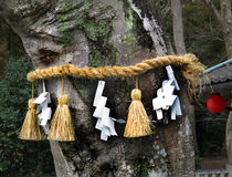 Shimenawa um Baum, Schrein Himure Hachiman, Omi-Hachiman, Stockfoto