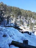 Shimla stock foto's