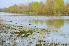 Shimmering lake Stock Photos