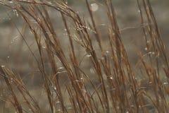 Shimmering Prairie Grass Stock Photos