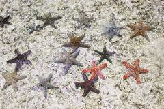Shimmering starfishes in the sea stock photo