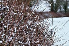 Shimplings-Suffolk im Schnee stockbild