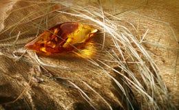 Shine amber and dry grass. Creative still-life with shine amber and dry grass Stock Photography
