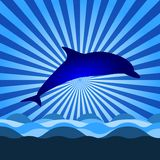 Shine with dolphin Royalty Free Stock Photography