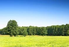 shine krajobrazowa wiosny fotografia royalty free