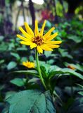 Always Shine like a flower stock photo