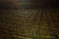 Shine repeating lines of vineyard royalty free stock images
