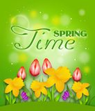 Shine Spring Time Royalty Free Stock Image