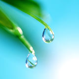 Shine water drop Stock Photography