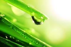 Shine water drop. Water drop shine in sun light Royalty Free Stock Photos