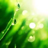 Shine water drop Stock Photos