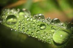 Shinewassertropfen Lizenzfreie Stockfotos