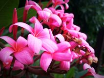 Shiney flower stock photo