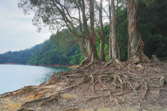 Shing Mun Reservoirof Trees Pattern foto de stock