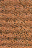 Shingle. Old red shingle abstract background Stock Photos