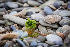 Shingle beach Royalty Free Stock Photography