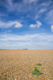 Shingle beach with single plant with yellow flower in foreground Royalty Free Stock Photos