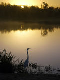 Shingle Creek At Dawn Royalty Free Stock Photos
