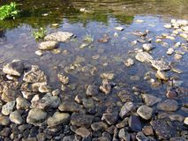 shingle, river stones water , boulder Royalty Free Stock Photos