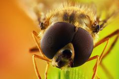 Shinichivlieg op een grassprietje stock foto's