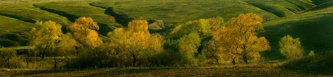 Shining autumn trees Royalty Free Stock Photography