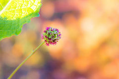 Shining bright. Close up photo of a small round flower with blurry background royalty free stock photo