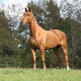 Shining chestnut horse standing on horizon